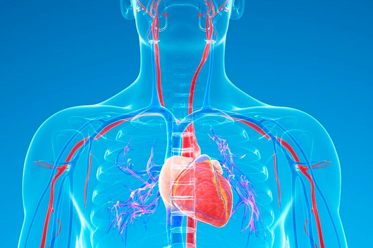 Ateneo de Cardiología - Puesta al día: Enfermedad Carotídea
